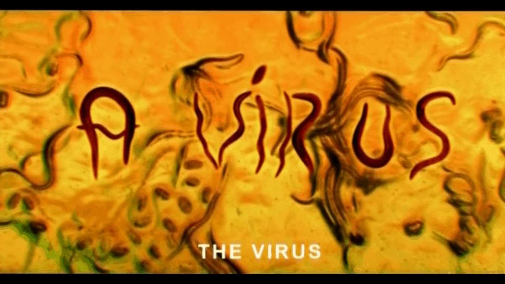 The Virus Ágnes Kocsis